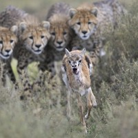 wildlife photographer of the year 2012 2