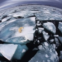 wildlife photographer of the year 2012 4