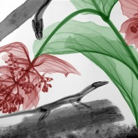 X ray photography par Arie van't Riet 1