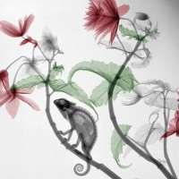 X ray photography par Arie van't Riet 2
