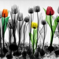 X ray photography par Arie van't Riet 5