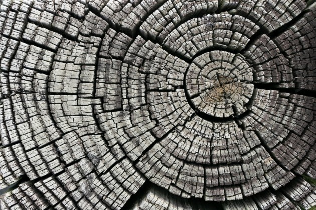 Source Flickr - Cracked Tree Stump