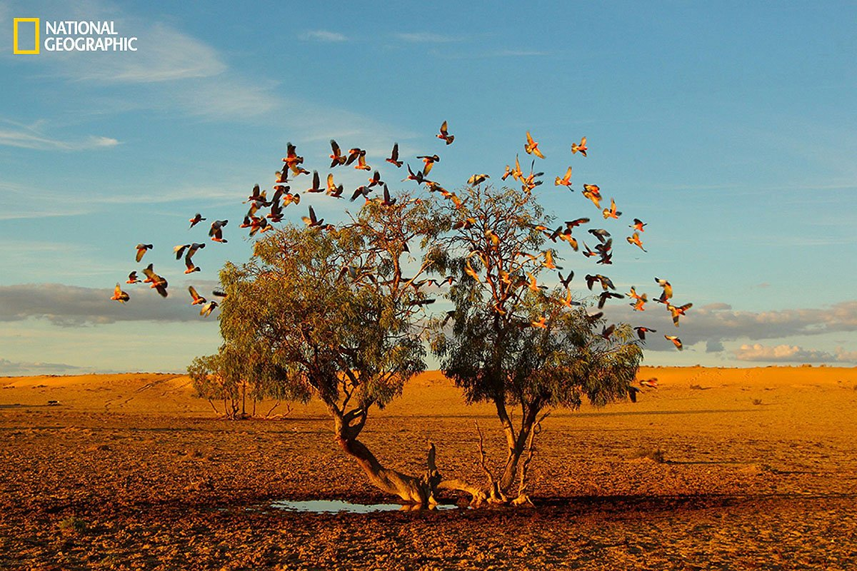 how to join national geographic photo contest